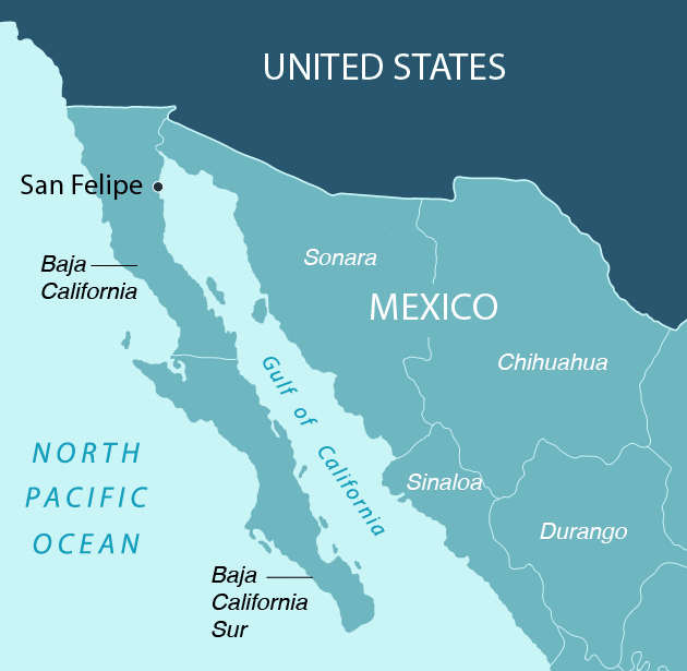 Fates Intertwined: Vaquitas, Totoabas, and Fishing on the Sea of Cortez