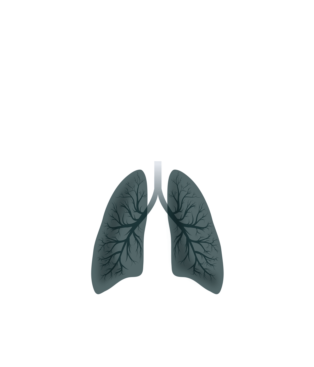 How Covid Affects the Body interactive graphic - Highlighted lungs